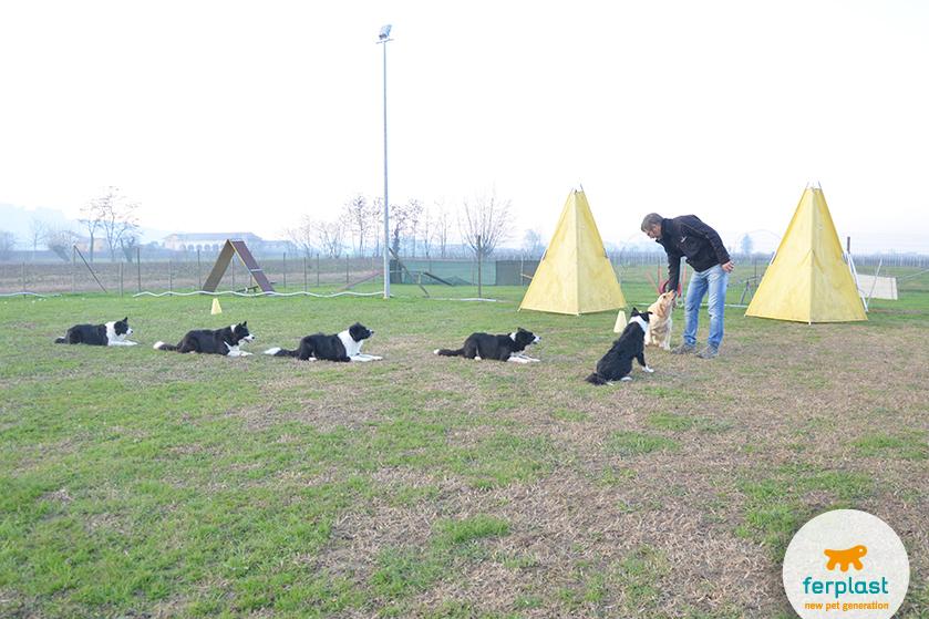 como_llegar_a_ser_educador_de_perro