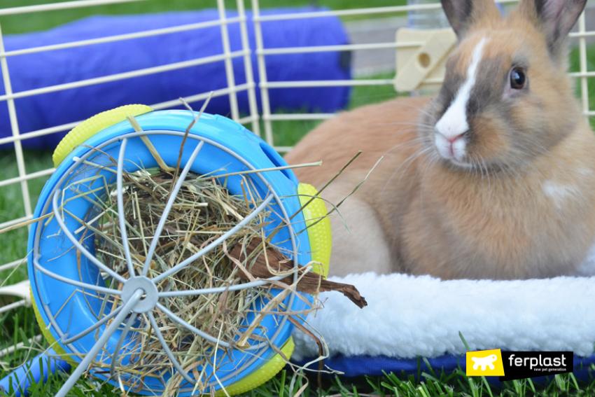 Cosa Mangiano I Conigli Alimentazione E Cibi Vietati Love Ferplast