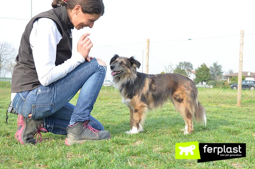 elisa_pellizzari_Entrenadora_de perros_wedogi