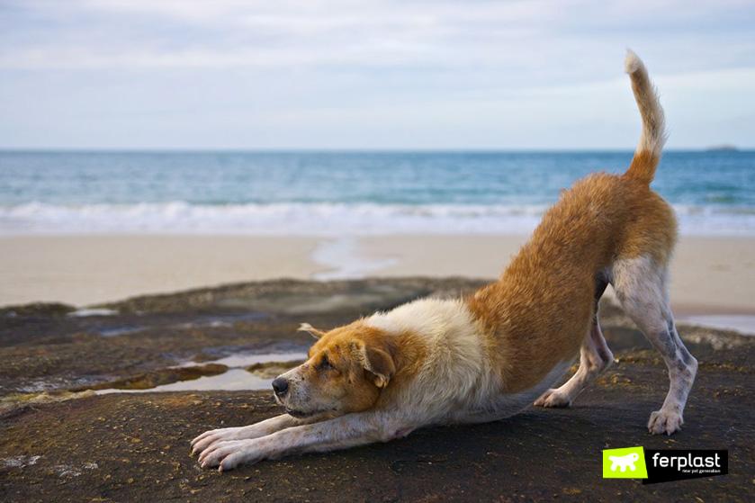 praticare_yoga_con_cane_come_fare