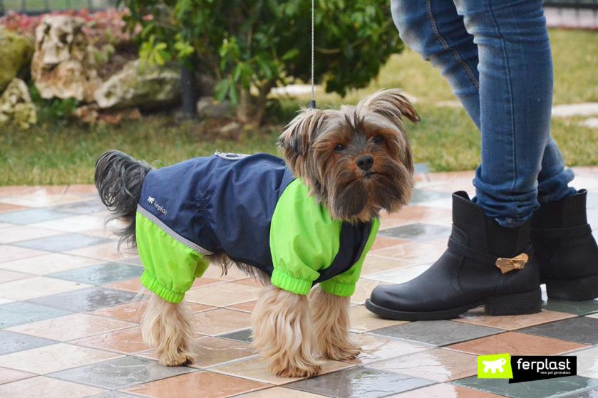 remédios_de_cachorro_fedorento