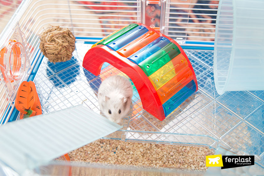 WHAT NOT TO DO WHEN YOU HAVE A HAMSTER - LOVE FERPLAST