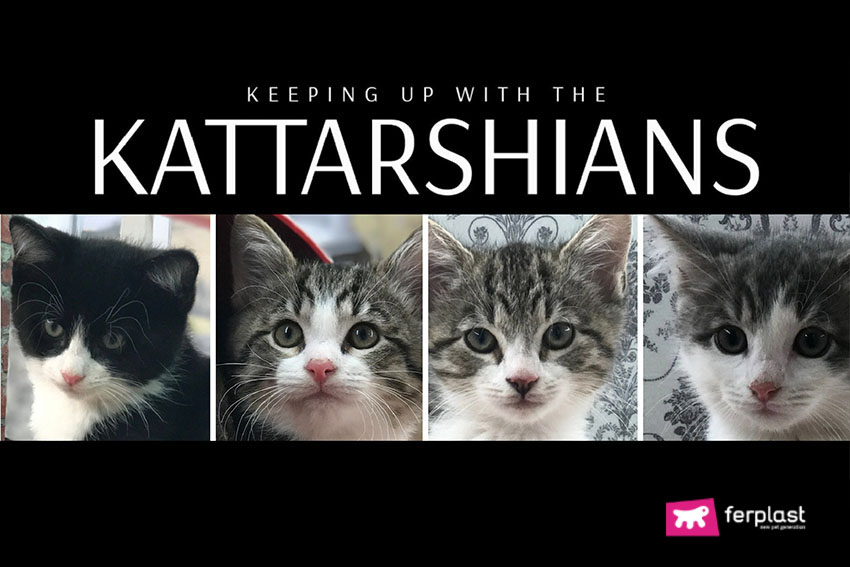 KATTARSHIANS: O REALITY SHOW COM GATOS