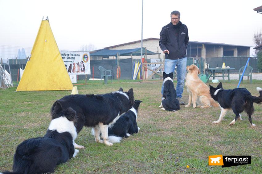 Работа_с_животными_тренер_ для_собак