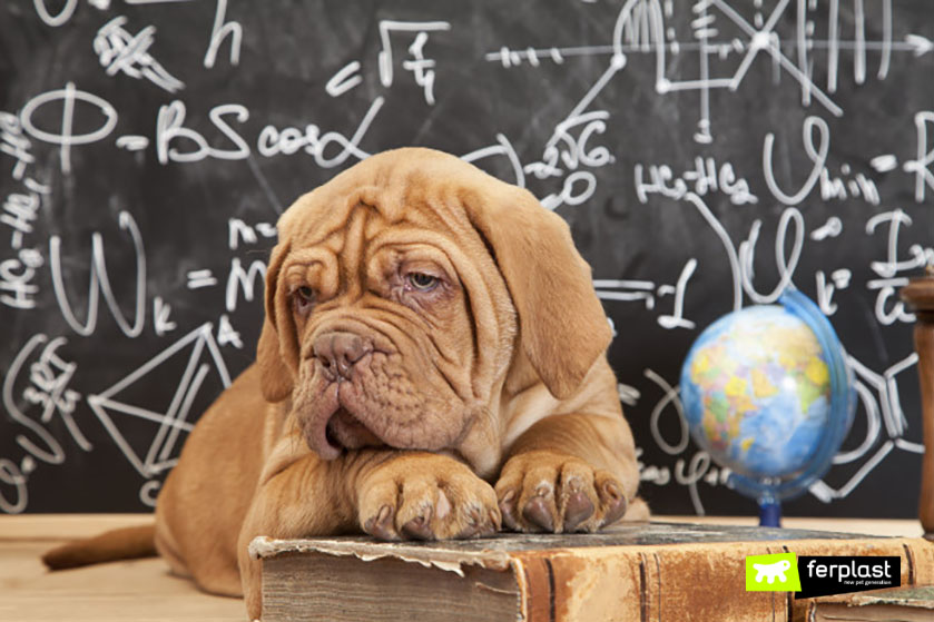 progetto_cane_scuola_bambini