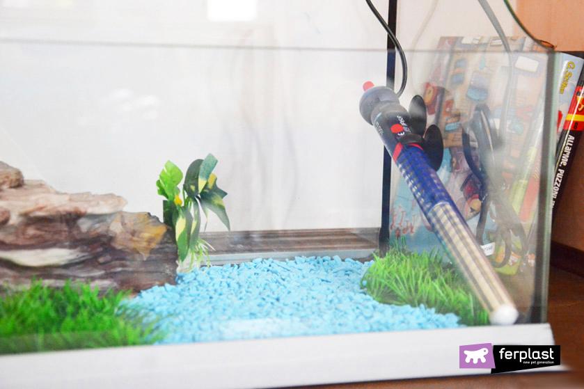 Le tartarughe d 39 acqua e il letargo cosa fare consigli e for Tartarughe per acquario