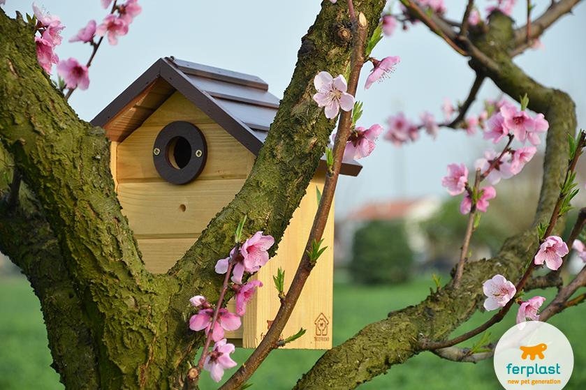 cómo_instalar_las_casas_para_pájaros_de_ferplast