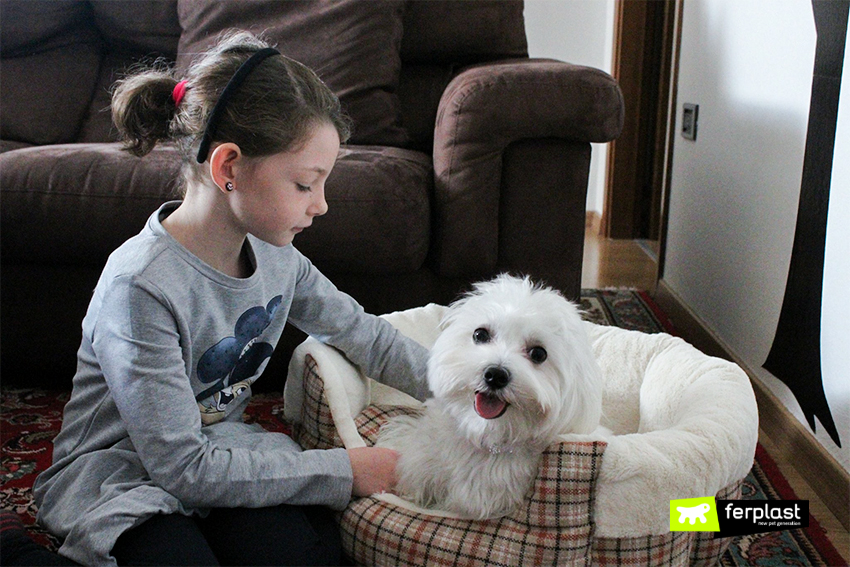 cuccia-tartan-ferplast-etoile-cane-maltese