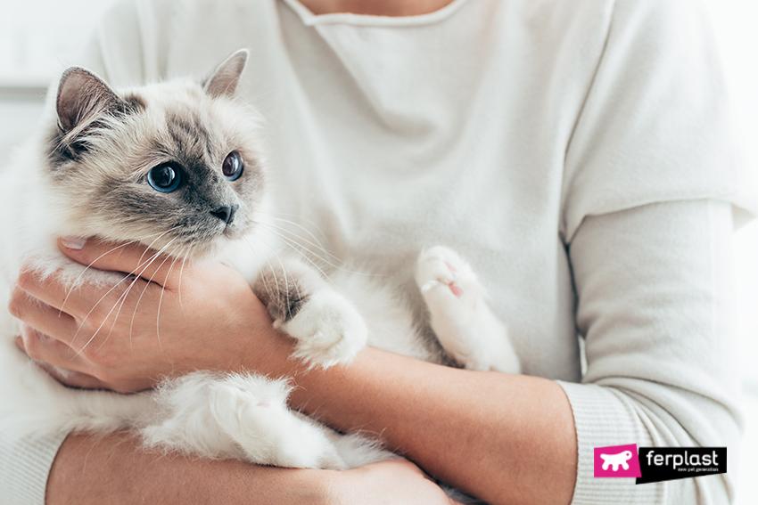 кошки_обнимаются_ласки