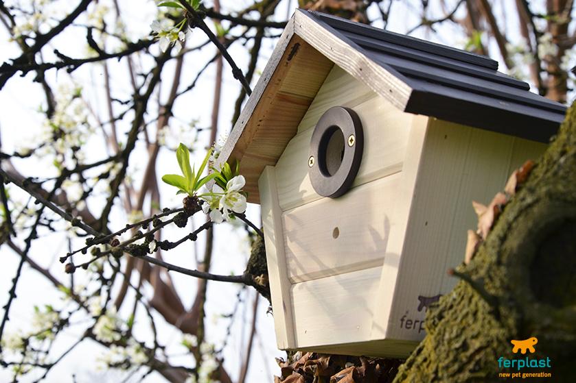 instalar_casas_para_pájaros_ferplast_árbol_instrucciones_consejos