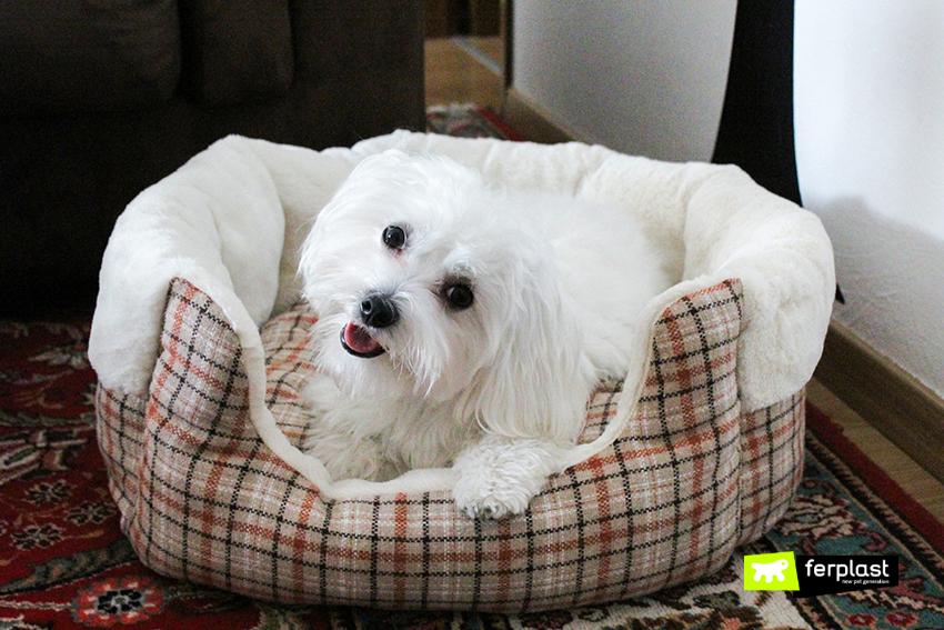 Arredamento tartan cucce e lettini a quadretti per cani for Arredamento per cani
