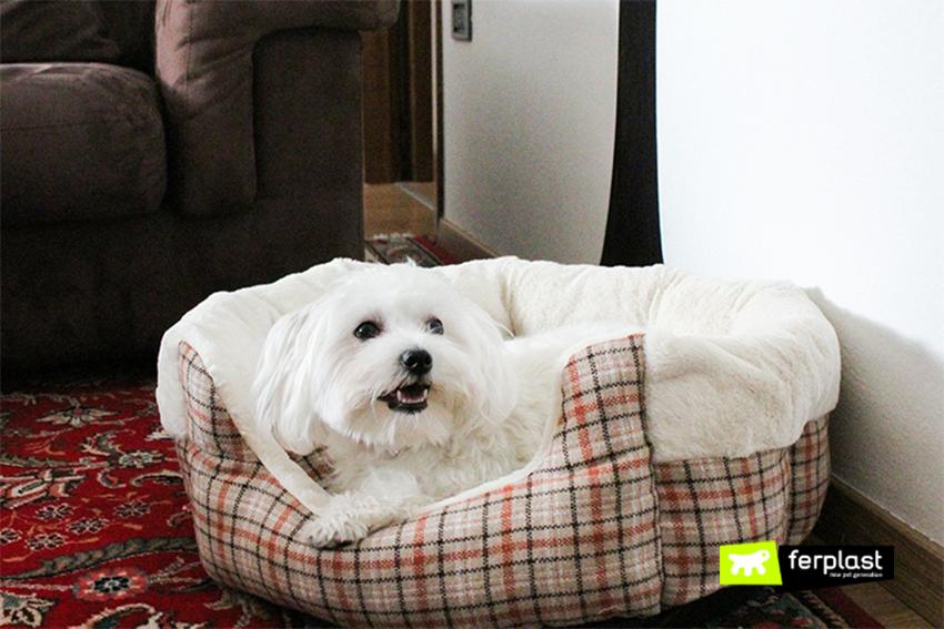 maltese-cane-cuccia-etoile-ferplast-tartan-arredamento
