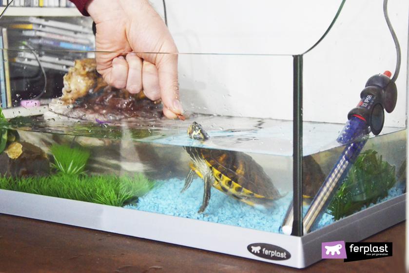 Do Aquatic Turtles Go Into Hibernation