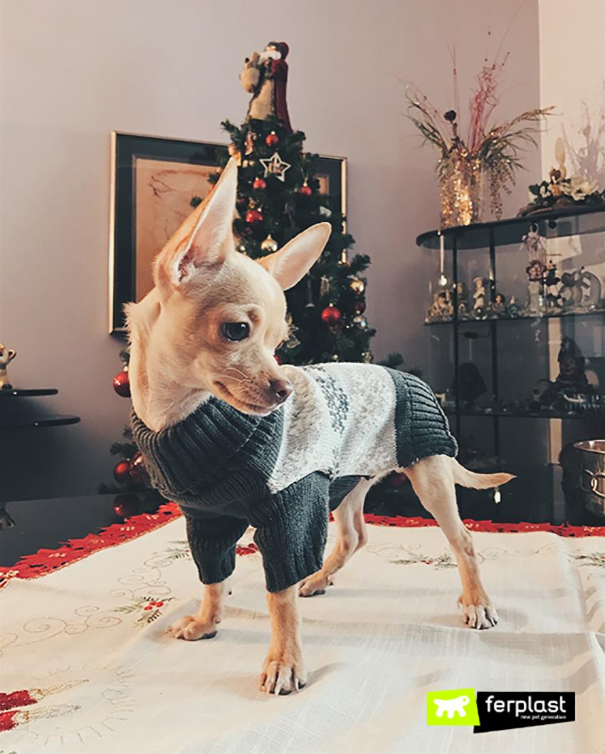 cane-pupy-ferplast-blog-fashion-chihuahua-03