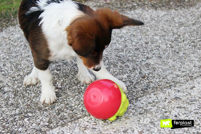 cão_brinquedos_de_ativação_mental_Ferplast
