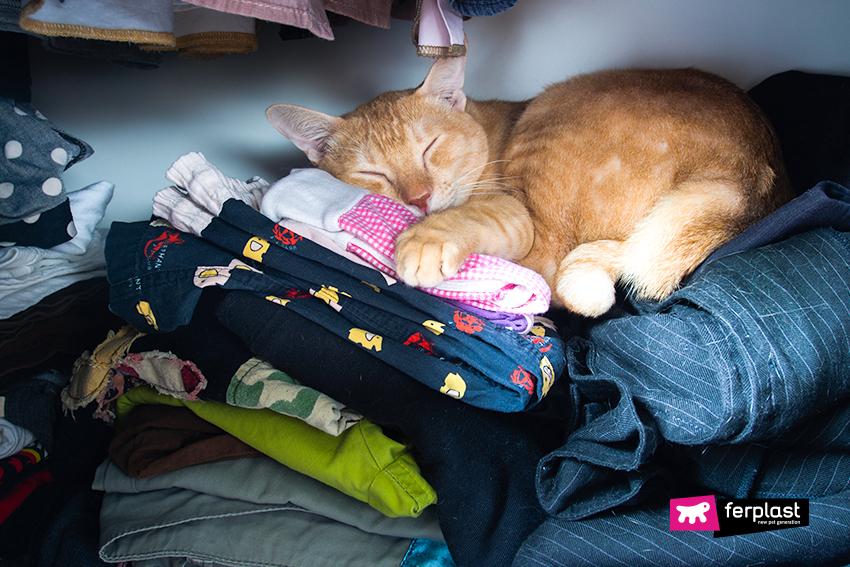 ferplast-blog-animali-cat-gatto-dorme-armadio-tufli-cuccia