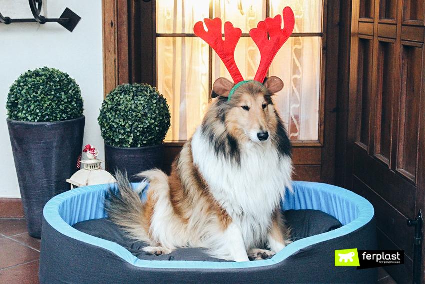 ferplast-blog-cuccia-cane-regali-natale
