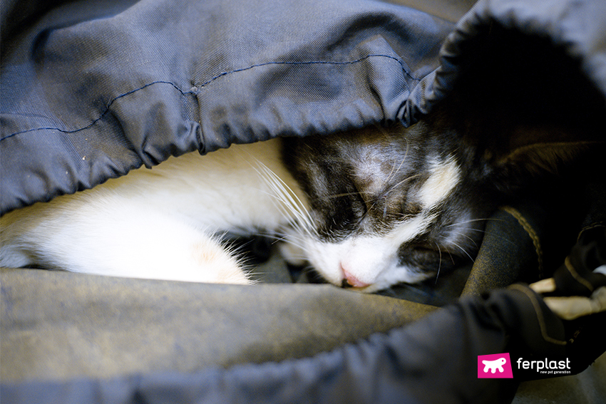 ferplast-blog-gatto-dorme-borse-pet-lovers-petlovers