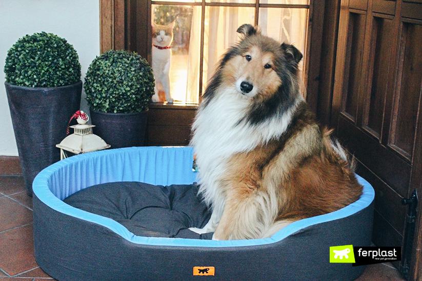 ferplast-blog-inverno-cuccia-cane-regalo