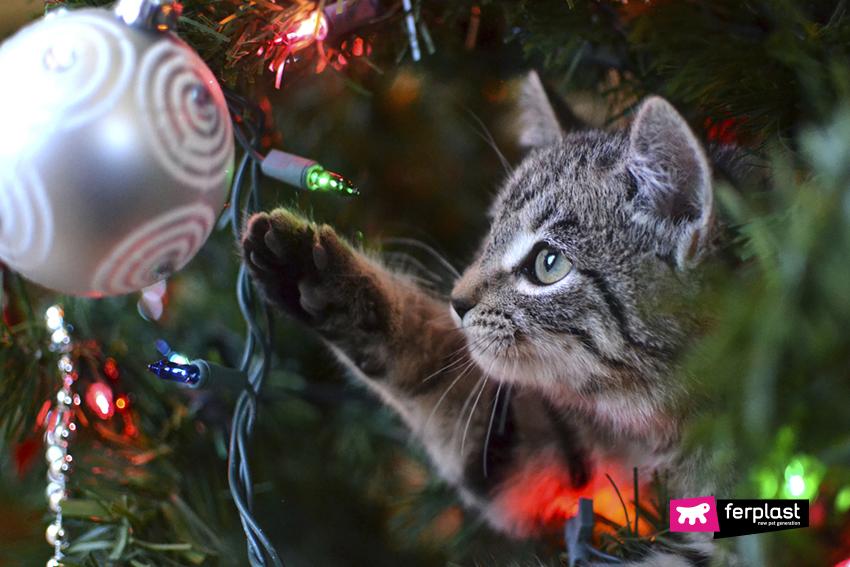 Immagini Natale Con Gatti.Come Salvare L Albero Di Natale Dal Gatto Consigli E Nuovi