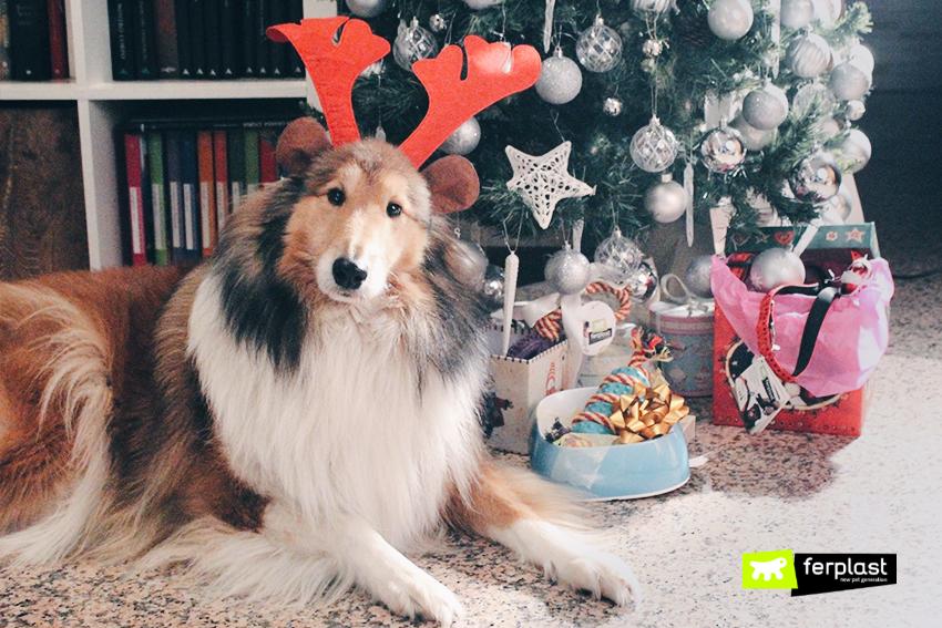 ferplast-natale-feste-cani-cuccia