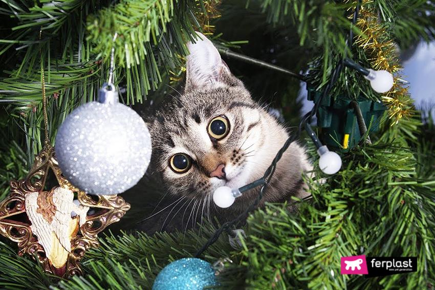 gatto_natale_albero_come_distrarre