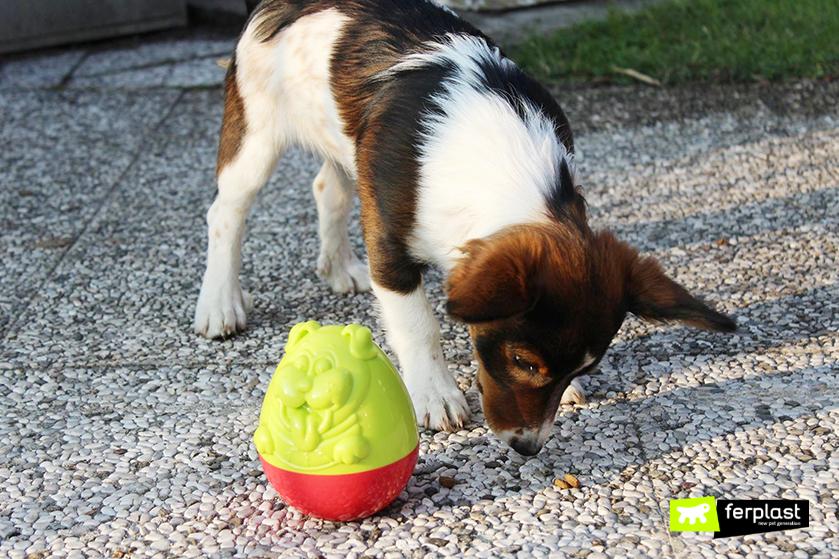 brinquedo_Ferplast_cão_croquetes