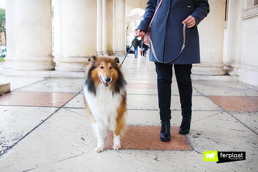 blog-ferplast-cani-al-museo-dove-posso-portare-cane-in-italia-palazo-madama-museo-piagio