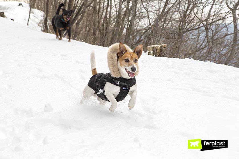 cani-sulla-neve-sciare-insieme