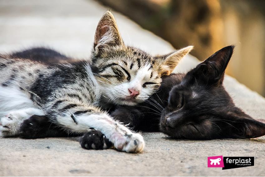 colonie-gatti-ferplast-inverno-branco