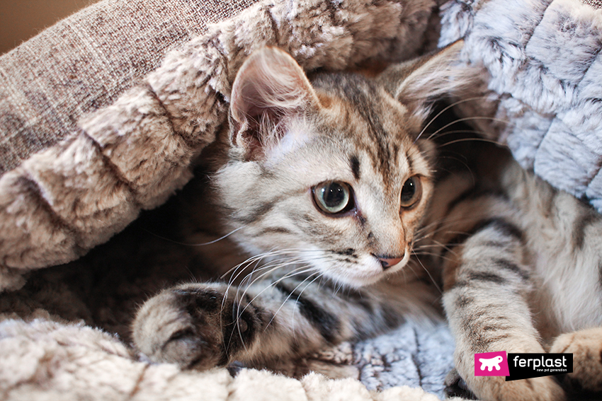 dove-dorme-gatto-ferplast-5-posti
