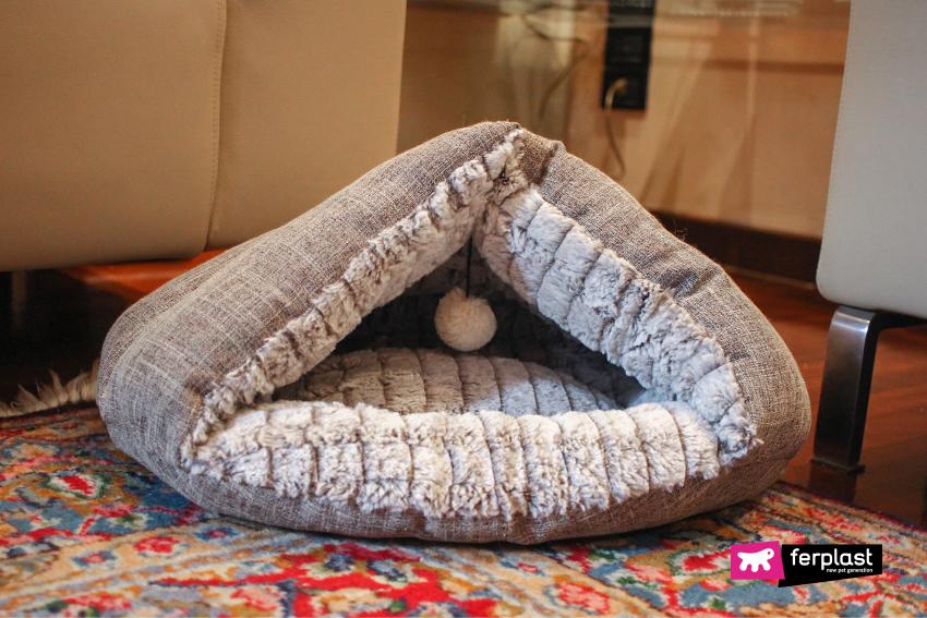 dove-dormono-gatti