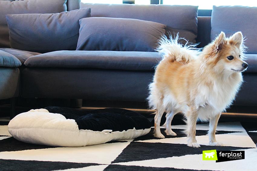 Arredamento bianco e nero i migliori cuscini per cani a for Arredamento per cani