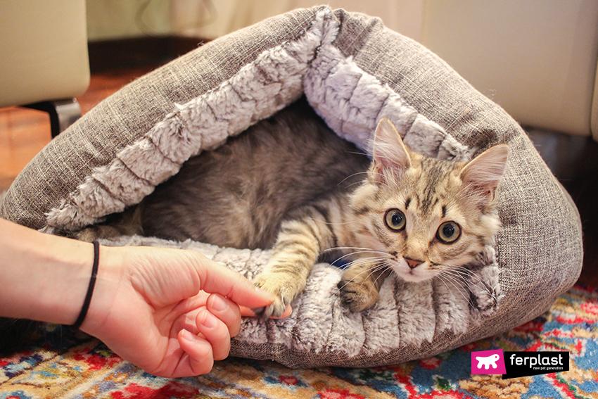ferplast-blog-cuccia-gatto