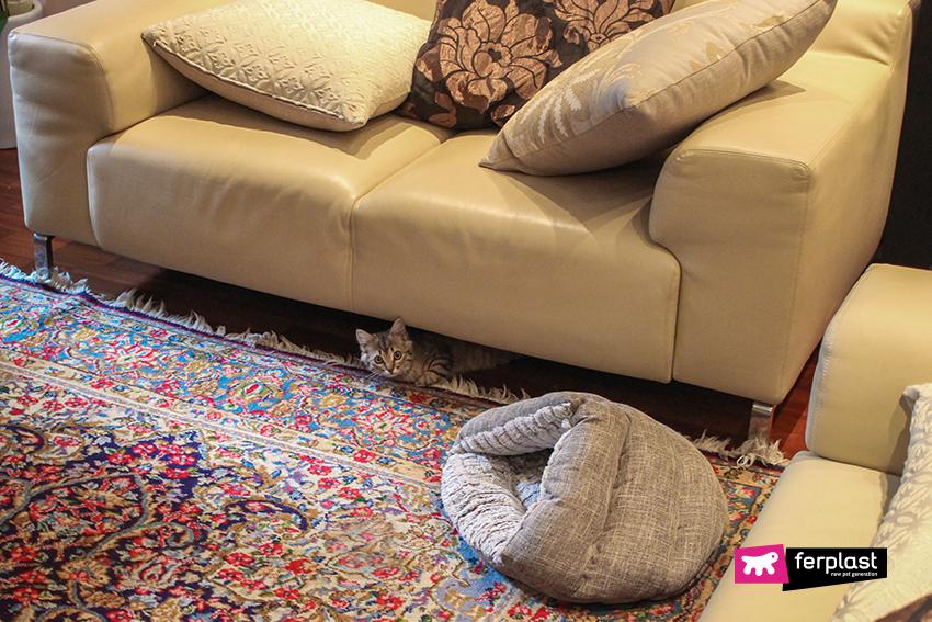 ferplast-blog-gatto-dove-dorme-casa