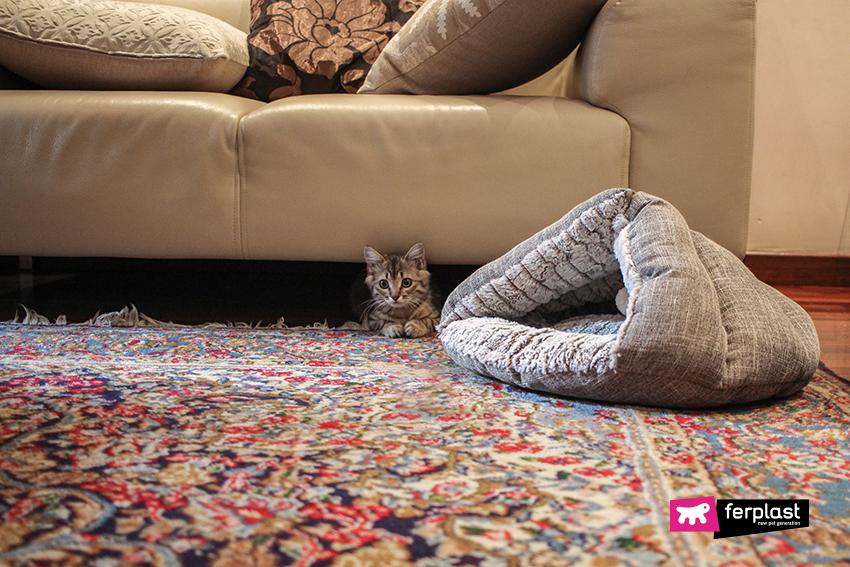 ferplast-gatto-dorme-cuccia