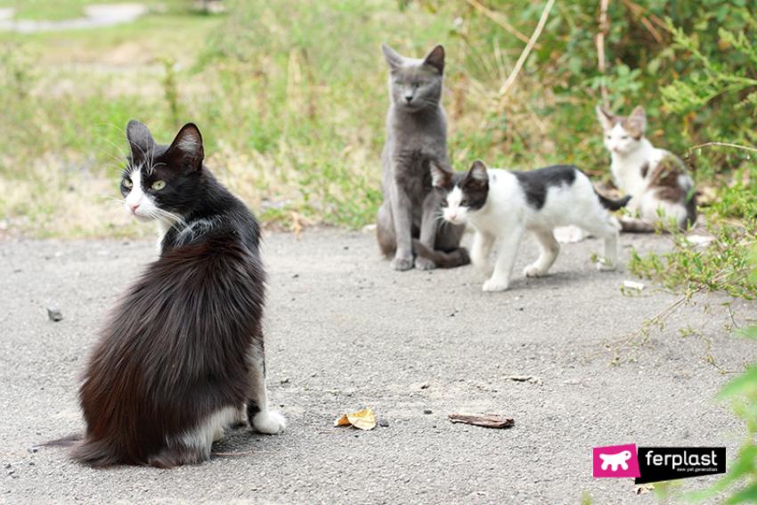 gatti-aiutare-inverno-randagi-ferplast-ciotola