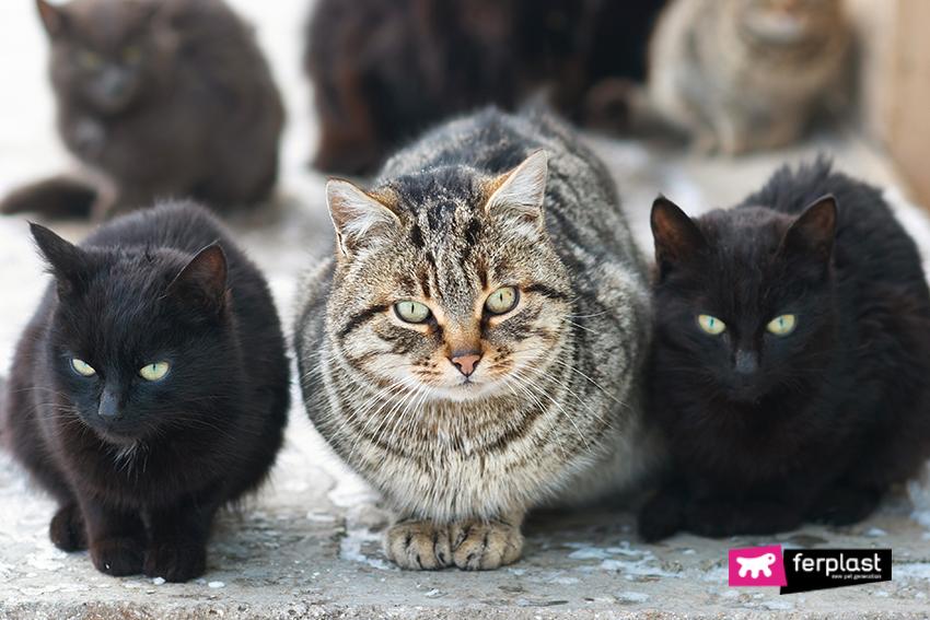 gatti-randagi-inverno-aiutare-branco