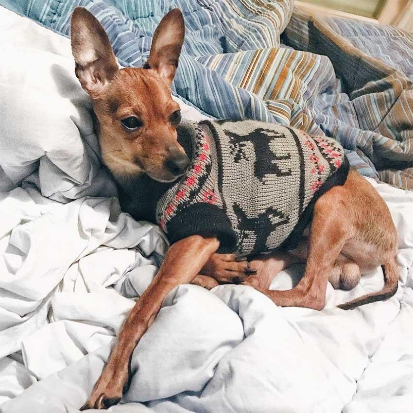 cão-suéter-ferplast-inveno