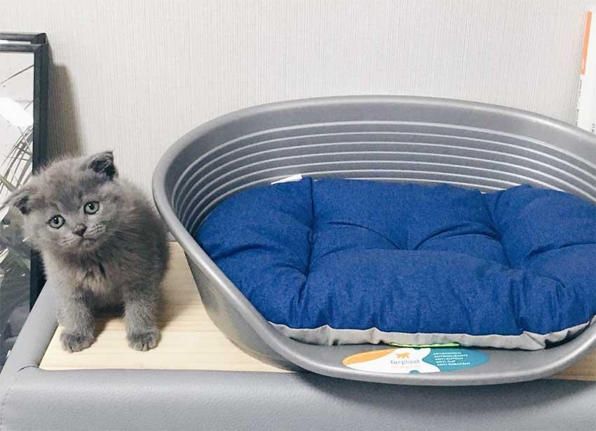 gatinhos-ferplast-inverno-relax-siesta-deluxe-pet-lovers