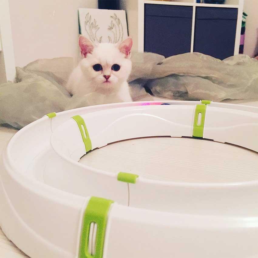 gato-ferplast-interativo-jogo-inverno