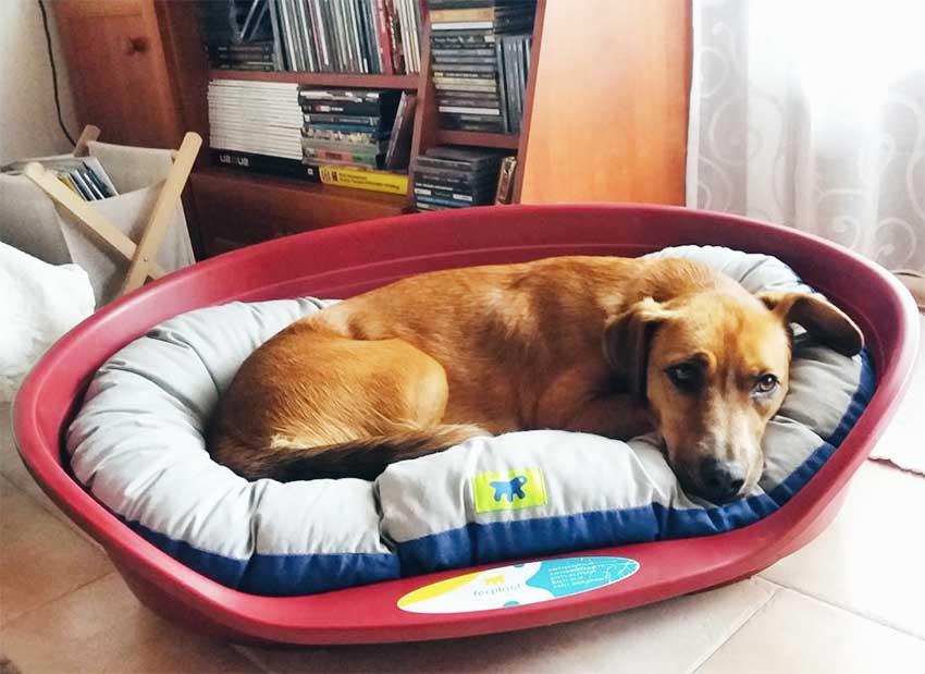 cão-ferplast-inverno-relax-siesta-deluxe
