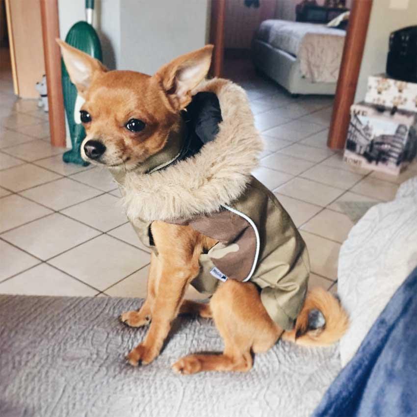 cão-jaqueta-ferplast-inverno