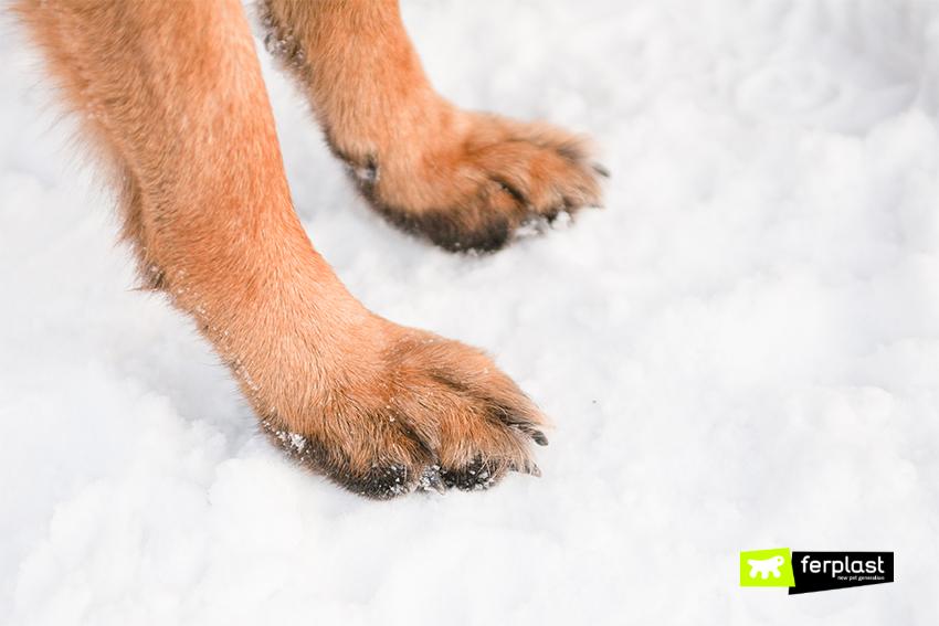 cane-inverno-come-curare-geloni-zampe