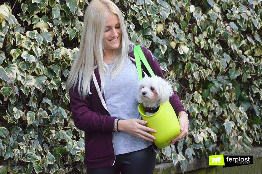 cão-pet-lovers-maltese-ferplast-transportar-cão-bolsa-precauções