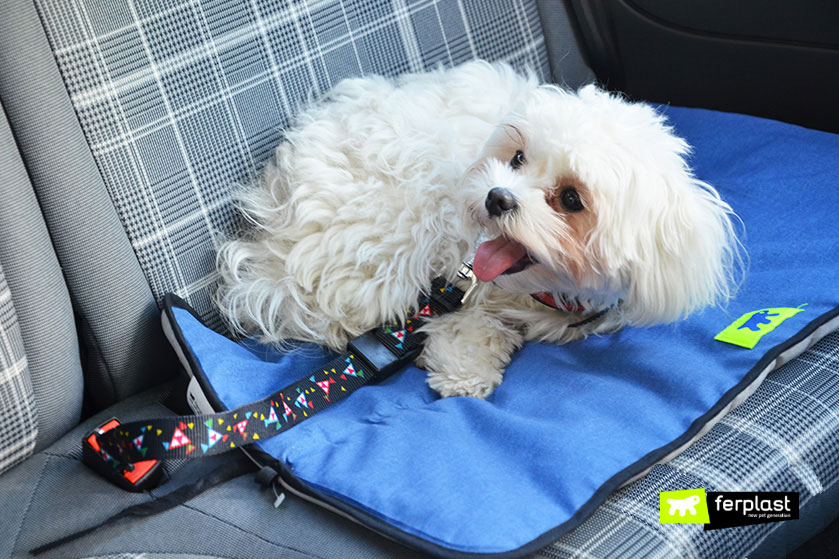 maltese-razza-cane-ferplast-pet-blog