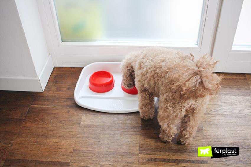 Blog Cane Dog Lindo
