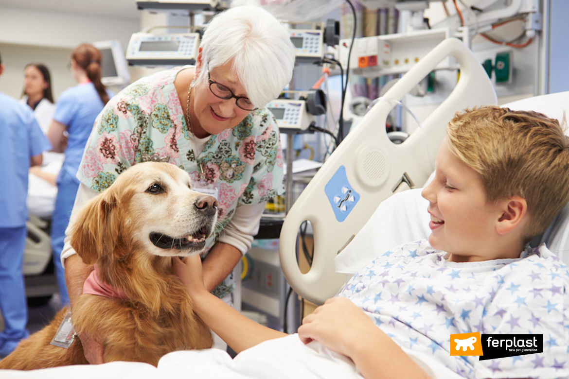 blog-ferplast-pet-cani-ospedale-therapy