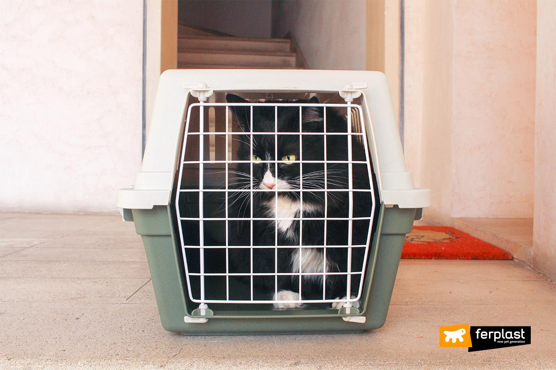 blog-pet-lovers-misure-trasportino