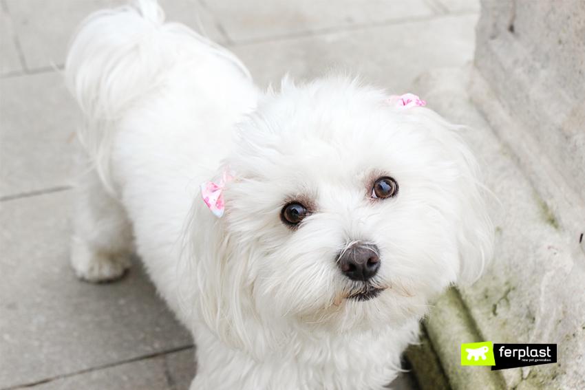 borsello-для-ходить-с-собака
